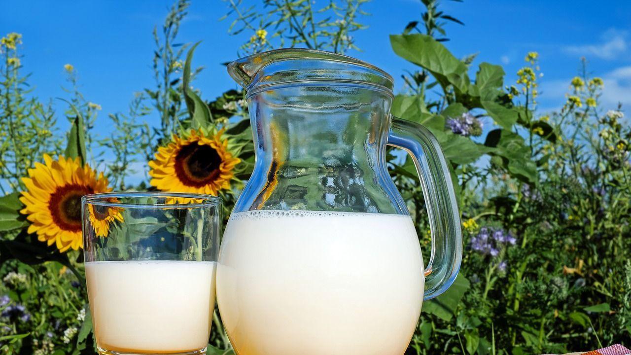 VLOG-Siegel: Bayerische Milchindustrie baut Sortiment aus gentechnikfreier  Milch aus