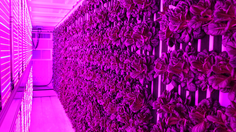 Sodexo, USA: Mensa-Gemüse frisch vor Ort ernten